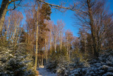 la forêt de Grendelbruch en hiver - 2