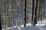 la forêt de Lutzelhouse
