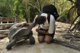 Aldabra_tortoise.jpg