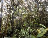 Mahé forest.