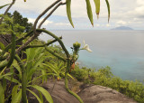 Vanilla_phalaenopsis._Habitat.2.jpg