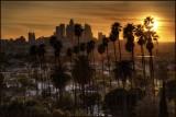 L A Palms Sunset