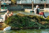 Invasive Weed Removal  1