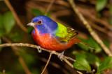 January Birding Trip to Florida