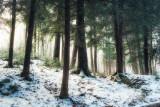 Hemlock woodland