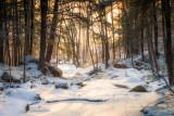Woodland scene in morning light