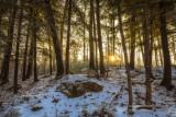 Sun in Hemlock forest