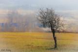 Lonesome_Tree