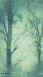 Grungy_Trees