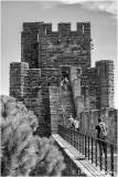 Carcassonne, sur les  remparts de la Cité.