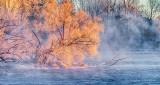 Frosty Fallen Tree In Sunrise Mist P1370979-85