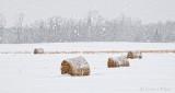 Bales In Snowfall P1050723-5