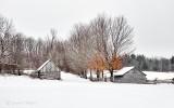 Winter Farmscape P1050856