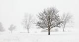 Trees In Winter Fog P1050886