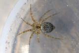 Spiders of Japan
