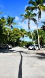 Palm Trees at Robbie's on Lower Matecumbe Key, Florida Keys, Florida 031 .jpg