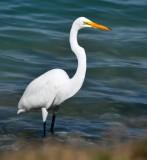 White Bird at Islamorada Boat Ramp, Islamorada, Floriday Keys, Florida 265
