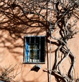 Vines and window, Albuquerque Old Town, New Mexico 278