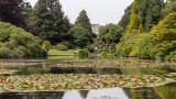 IMG_8547.CR3 The Lily Ponds - Sheffield Park Gardens - © A Santillo 2019