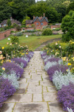 IMG_8557.CR3 Golden Rose Avenue in the walled garden - Chartwell House - © A Santillo 2019