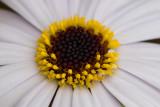 IMG_8151.jpg Unknown flower - © A Santillo 2020