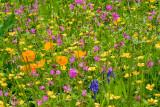 _MG_2211.CR2 Wild Flower Meadow -The Garden House - © A Santillo 2008