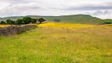 _MG_2245.CR2 Buttercup/Wildflower meadow - Hawes - © A Santillo 2008