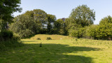 IMG_8868.jpg The remains of the earthworks of Lydford Norman Castle - © A Santillo 2020