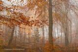 Forest, autumn - Herfstkleur, bos