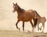 Ribbon-and-foal-2020-web-1.jpg