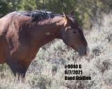 9040 Band Stallion  'G'