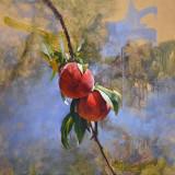Peaches 24 x 24