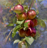 Apples, becoming