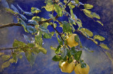 Evening Quince