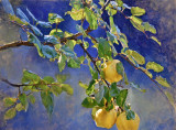 Evening Quince 24 x 37 1/2