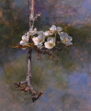 Branch of a Pear Tree 24 x 20