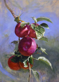 Apples 24 x 18