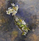 Pear Blossoms 24 x 16 1/2