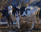 Cows 13 x 16 1/4