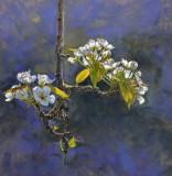 Pear Blossoms #2 24 x 24