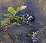 Blueberries 18 x 19 1/4