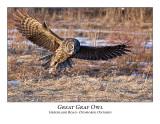 Great Gray Owl-047