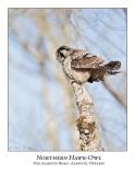 Northern Hawk-Owl-088