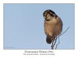 Northern Hawk-Owl-094