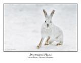 Rabbits / Hares