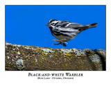 Warblers / Vireos