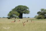:: Impala ::