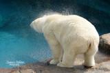 :: Zoo de     St-Félicien 2014 ::