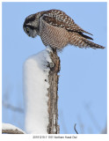 20191219-1 1161 SERIES -  Northern Hawk Owl.jpg