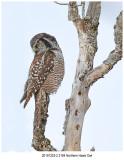 20191223-2 2184 - SERIES - Northern Hawk Owl.jpg